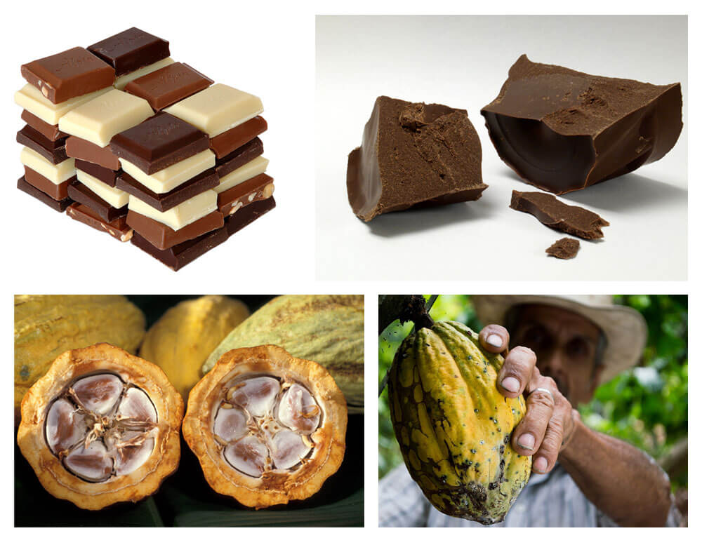 Chocolate Facts!